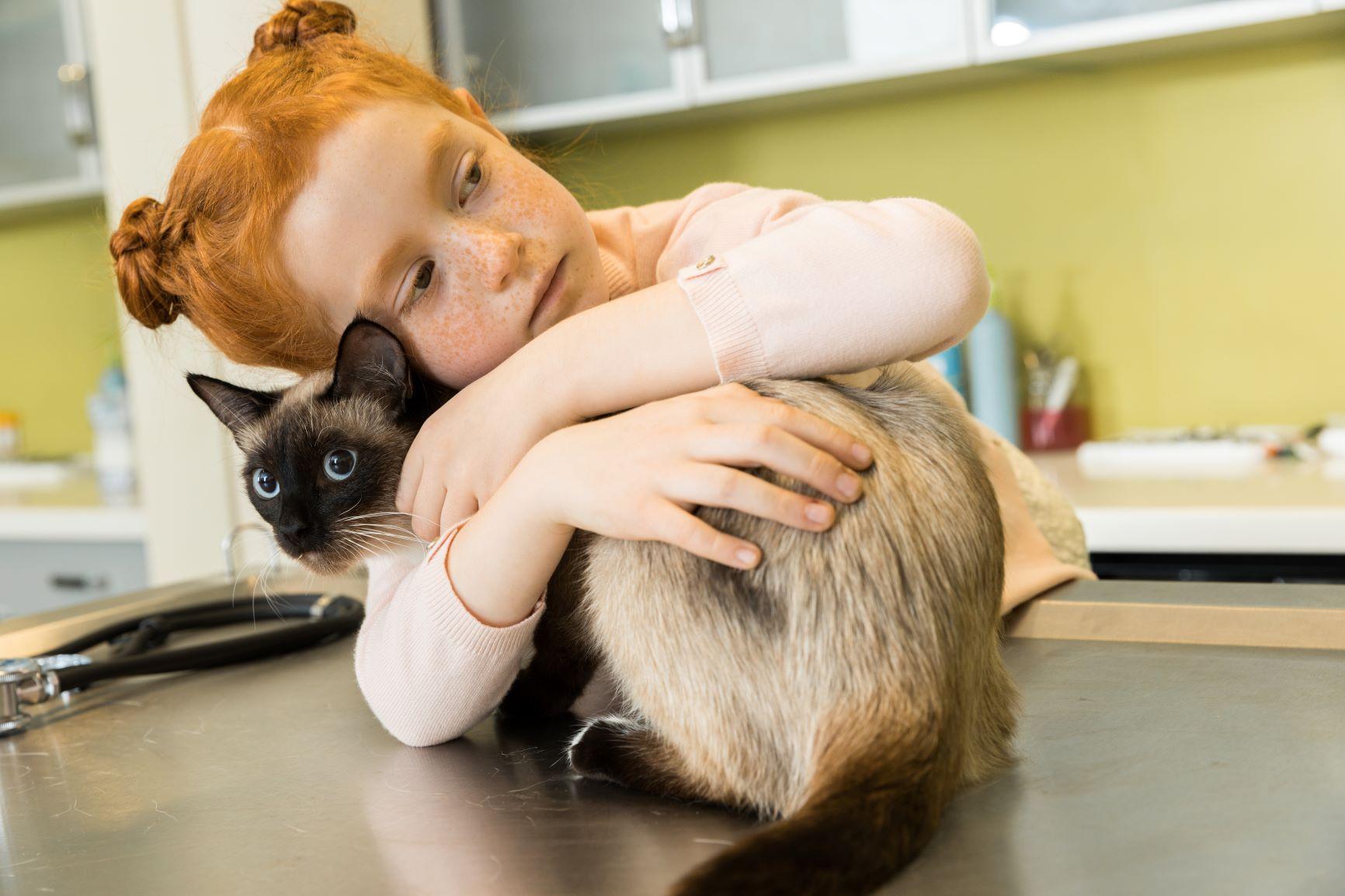 ipertiroidismo gatto